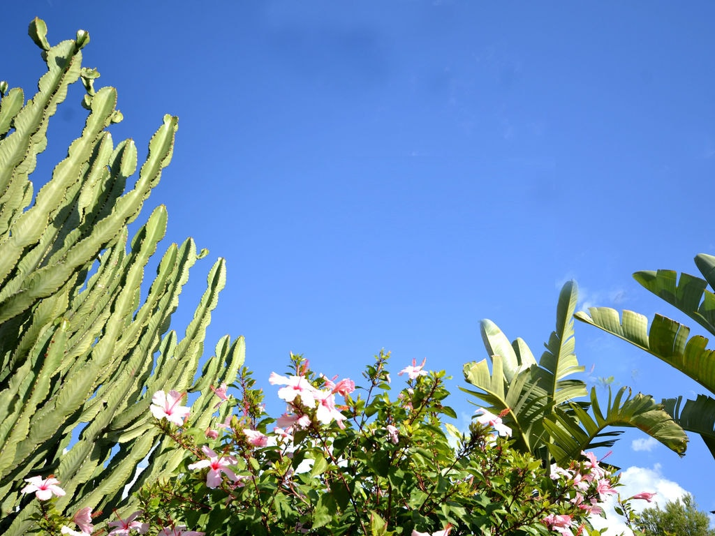 Objektbild