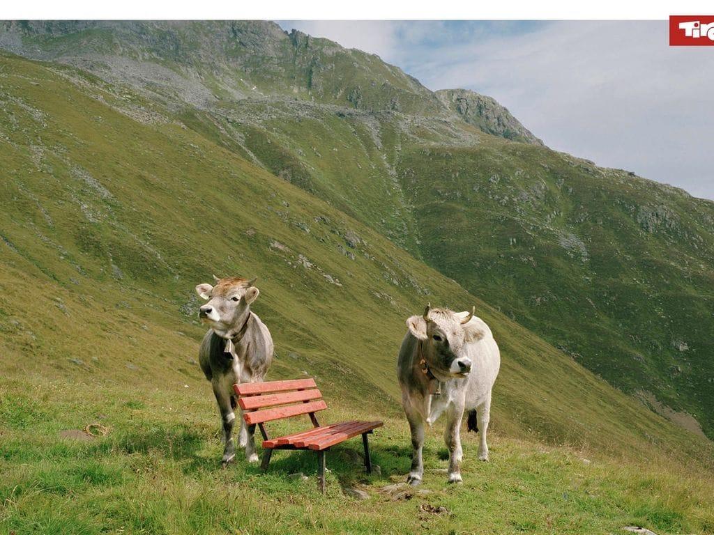Ferienwohnung Köllnberg (650893), Schwoich, Kufstein, Tirol, Österreich, Bild 15