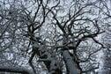 Vakantiehuis Directe omgeving (winter) (<1 km)
