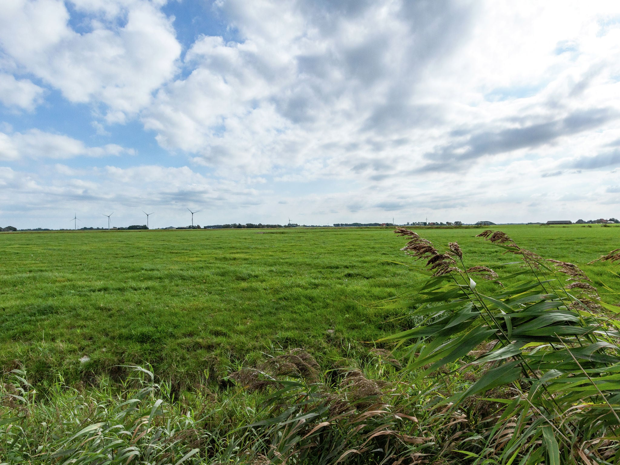 Holland | Friesland | Holiday home 't Friese Koetshuis | all year | ViewSummer