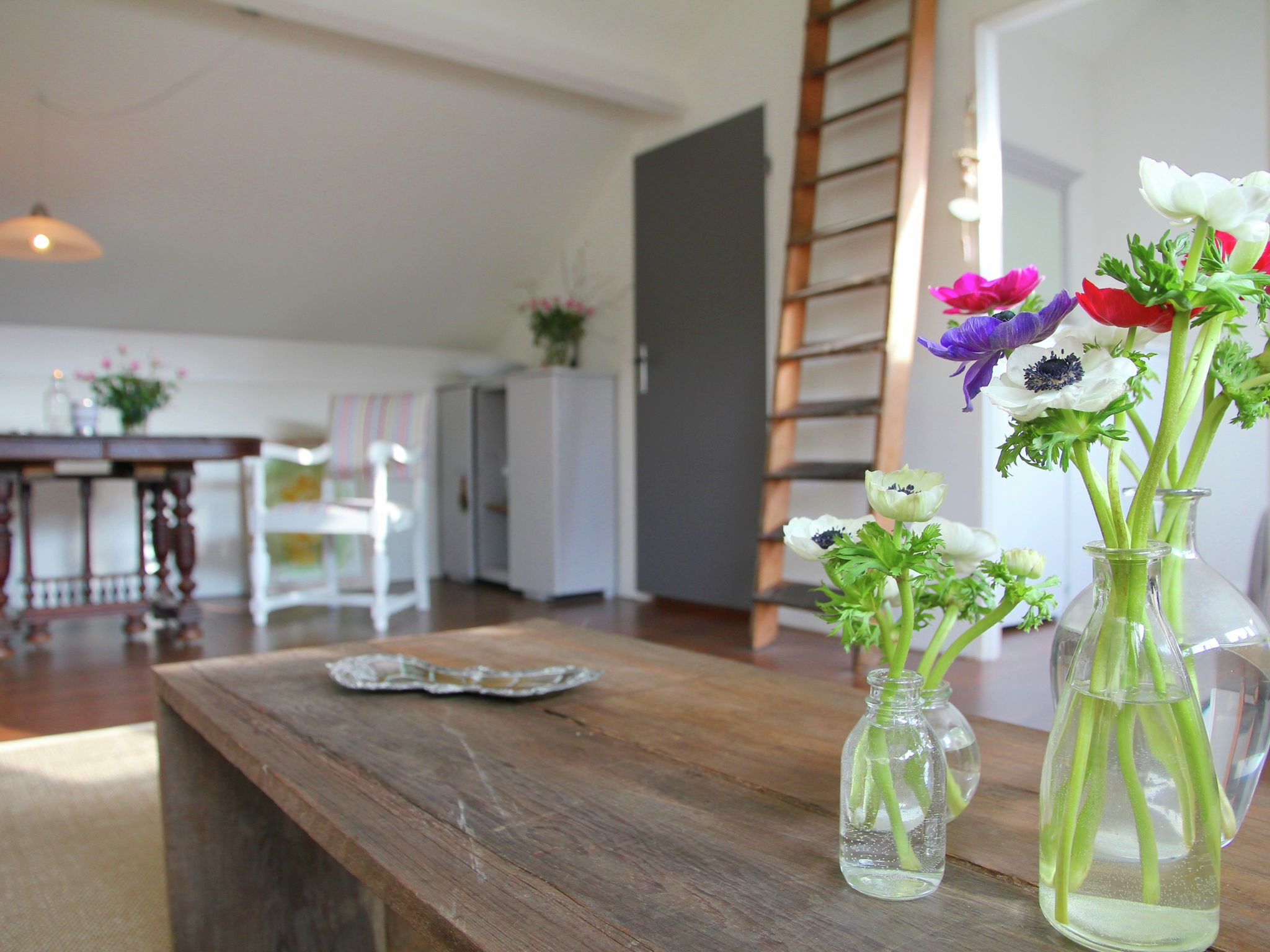 Holland | North Sea Coast North | Holiday home Hommel | all year | Ambiance