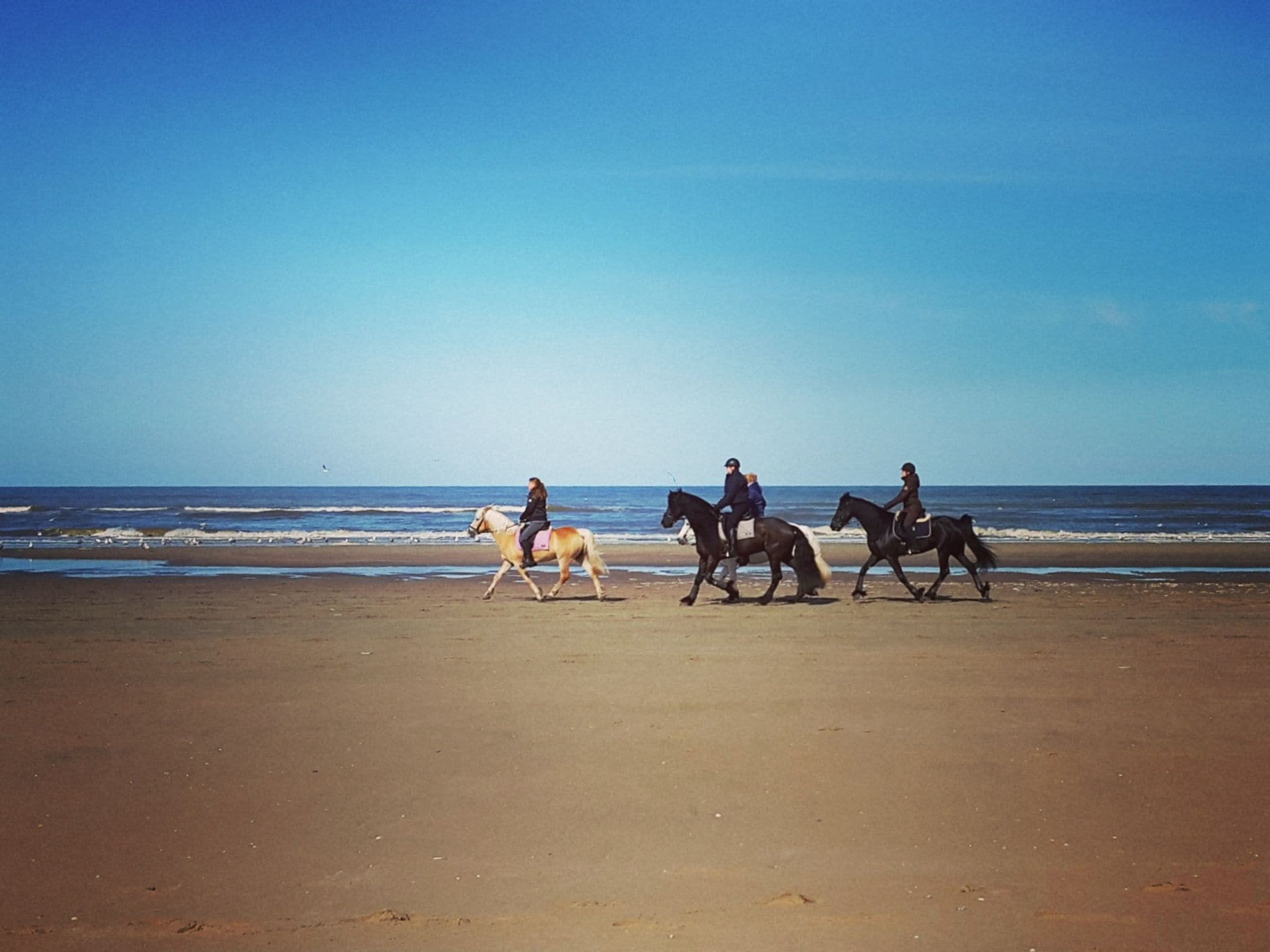 Holland | North Sea Coast South | Holiday home Zeearend Boulevard | all year | AreaSummer20KM