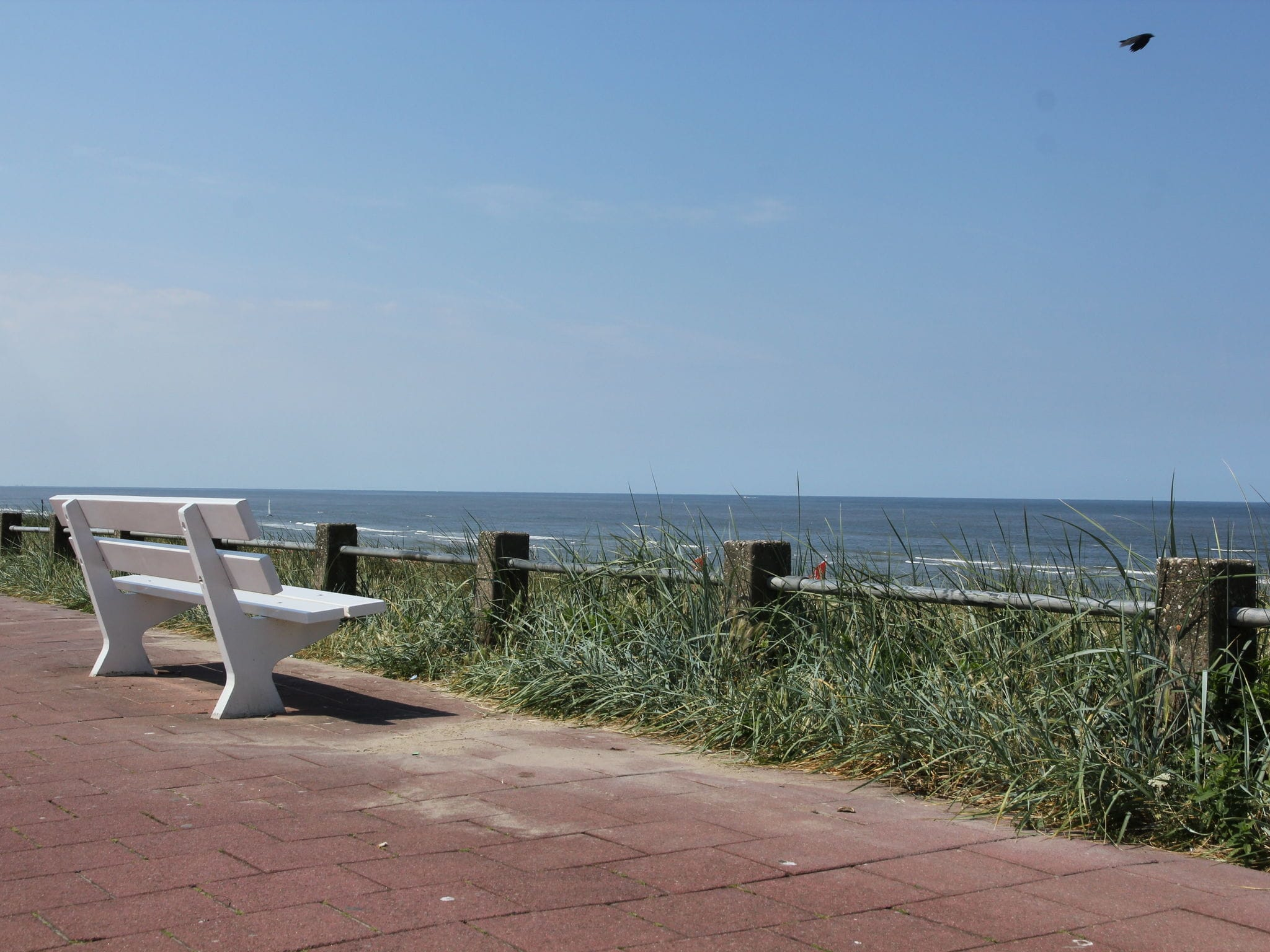 Holland | North Sea Coast North | Holiday home Zomerbries | all year | AreaSummer1KM