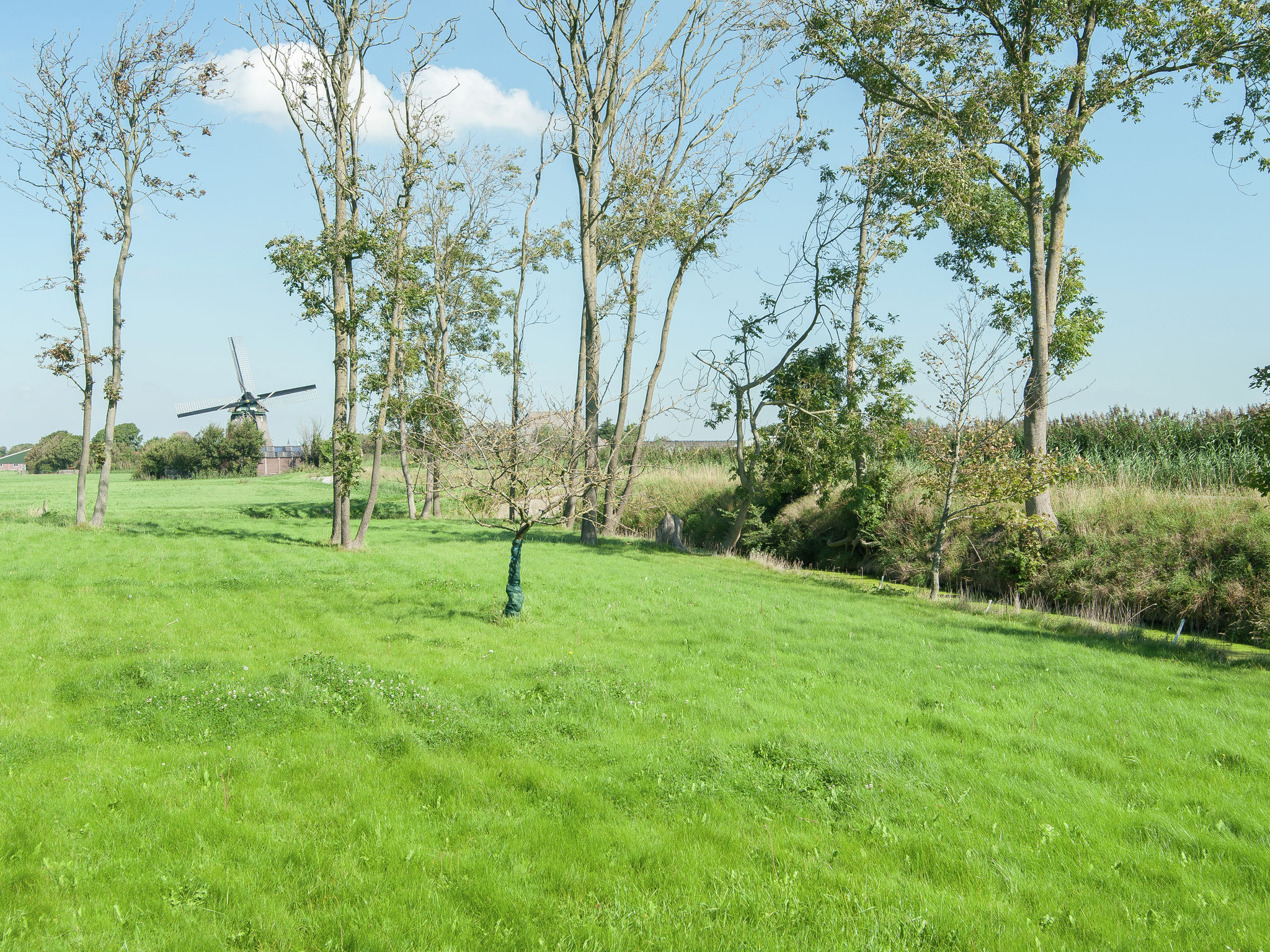 Holland | North Sea Coast North | Holiday home De Vier Jaargetijden | all year | ViewSummer