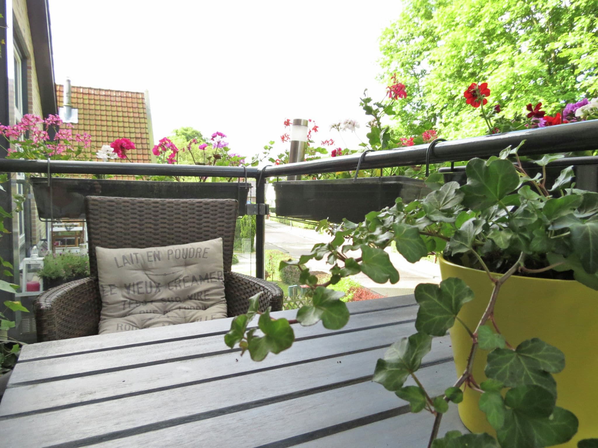 Holland | North Sea Coast North | Holiday home Samen | all year | TerraceBalcony