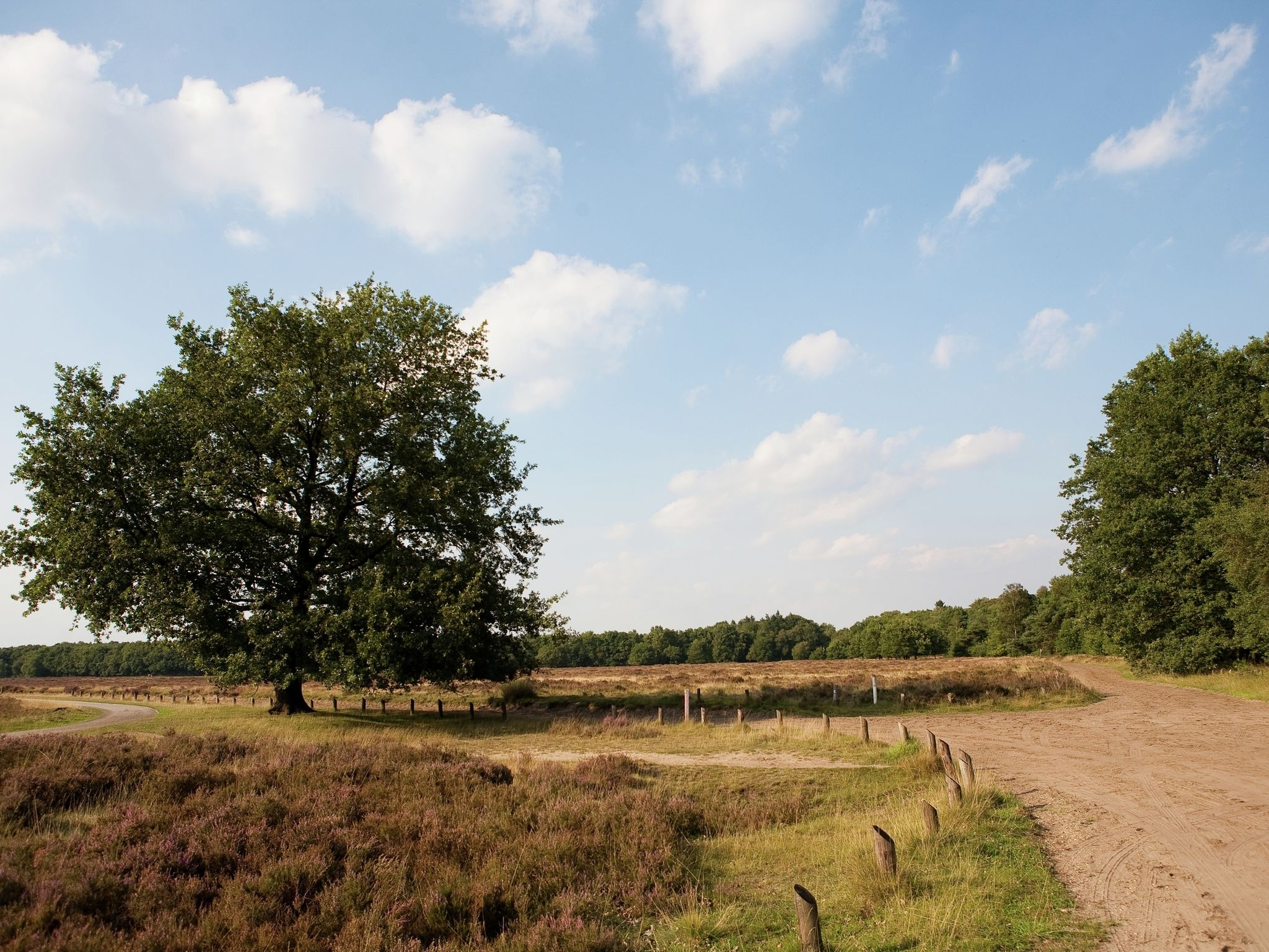 Holland | Gelderland | Holiday home Landgoed De Scheleberg | all year | AreaSummer20KM
