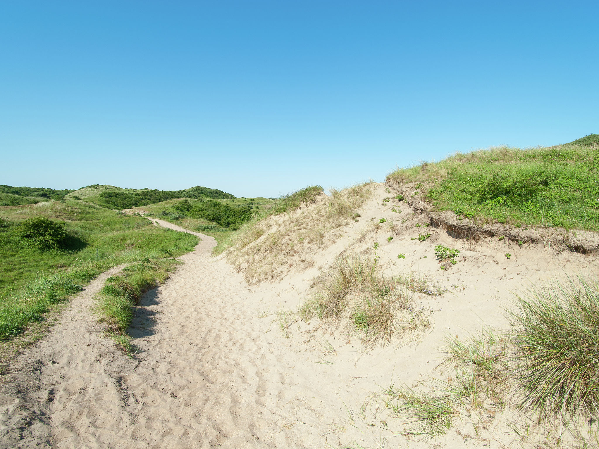 Holland | North Sea Coast North | Holiday home Sea Lodge met de hond | all year | AreaSummer20KM