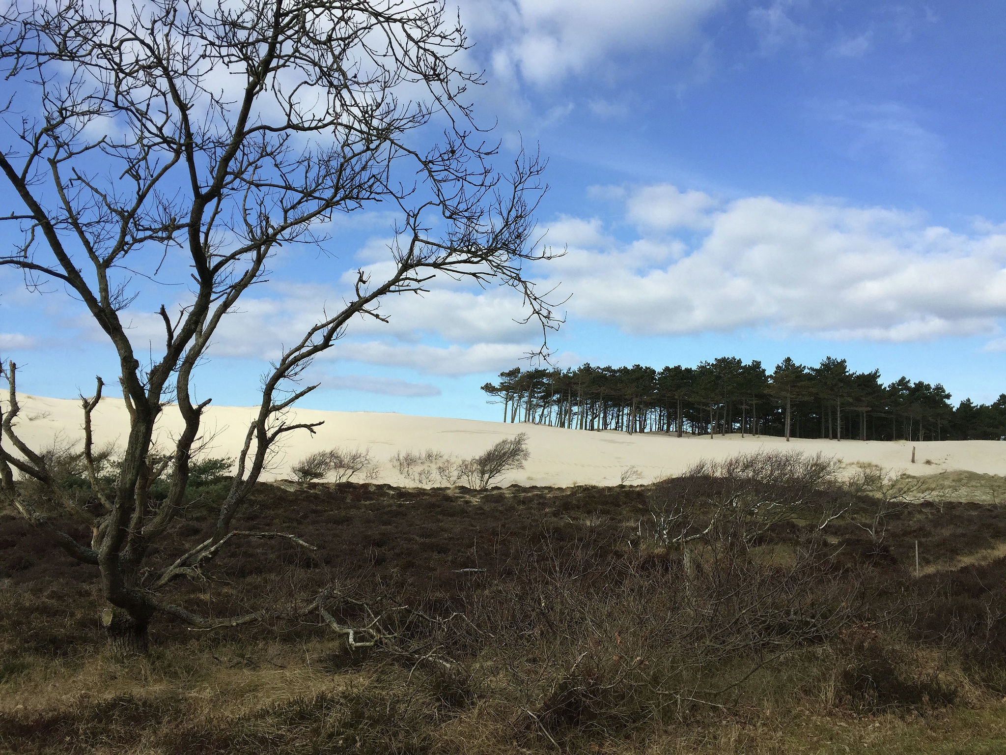 Holland | North Sea Coast North | Holiday home Zonnige Serre | all year | AreaSummer5KM