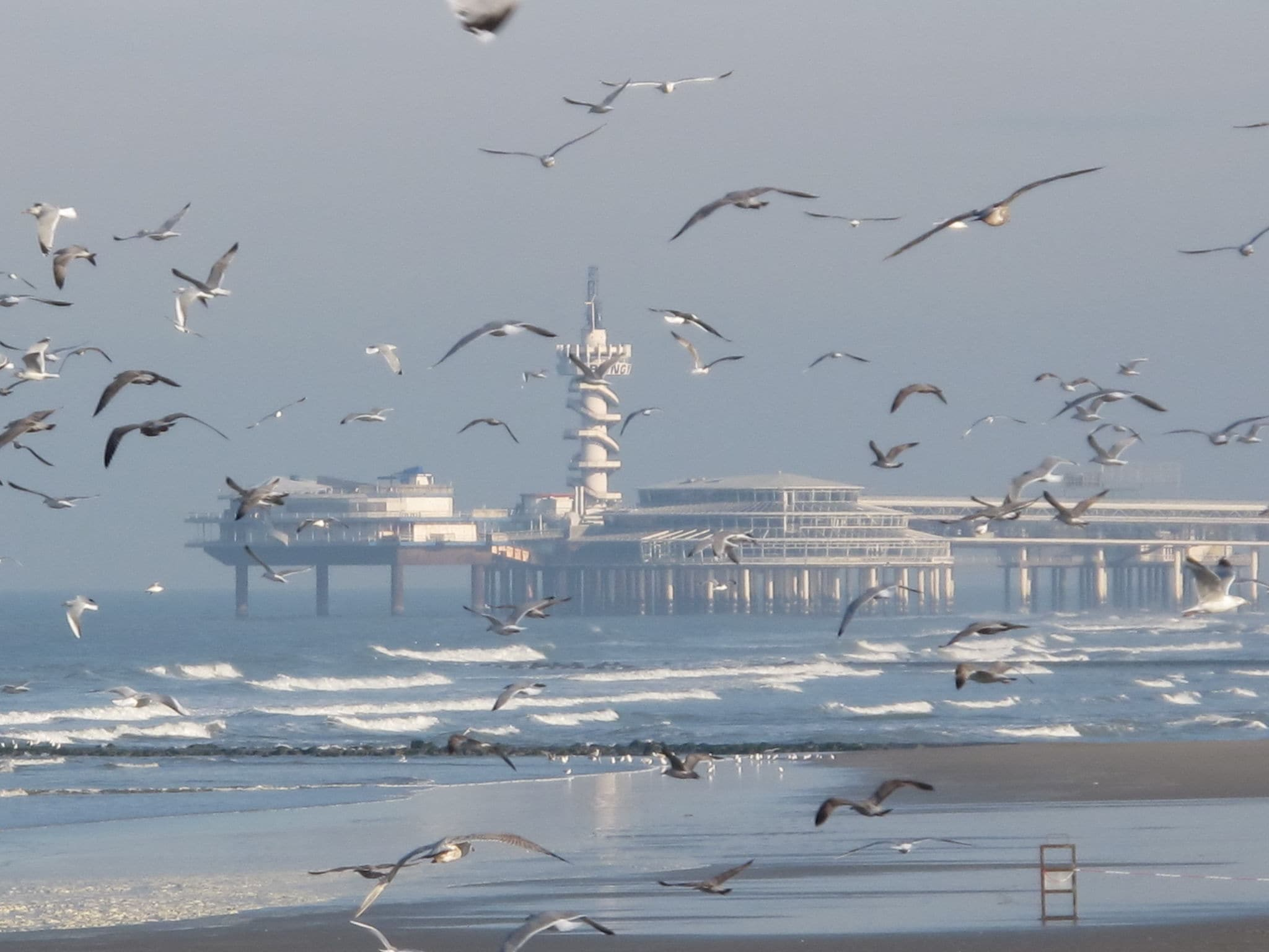 Holland | North Sea Coast South | Holiday home Het kleine vissershuisje | all year | AreaSummer20KM
