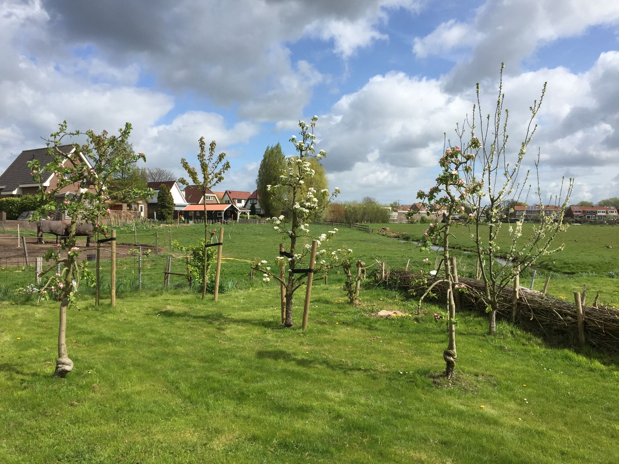 Holland | North Sea Coast North | Holiday home Charming Noord | all year | GardenSummer