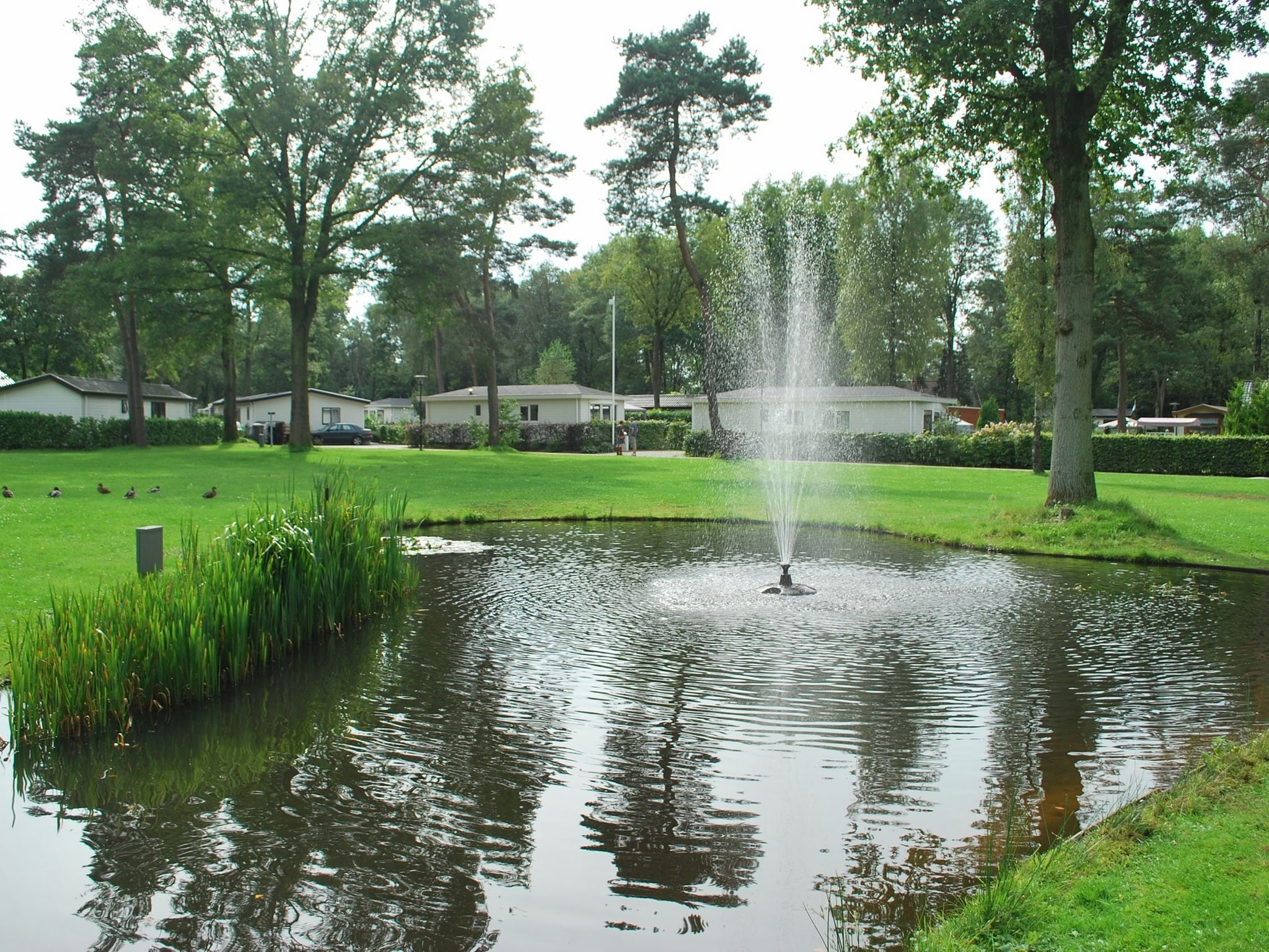 Holland | Gelderland | Holiday home Bospark Ede | all year | AreaSummer1KM