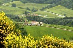 Vakantiehuis Olivi della Collina