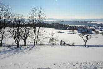 Borivoj