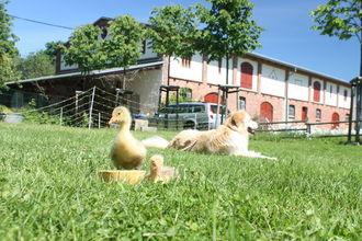 Ferienwohnung im denkmalgeschützten Bauernhaus