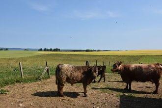 Urlaub auf dem Bauernhof - Kornspeicher - familienfreundlich
