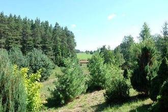 Masurian habitat
