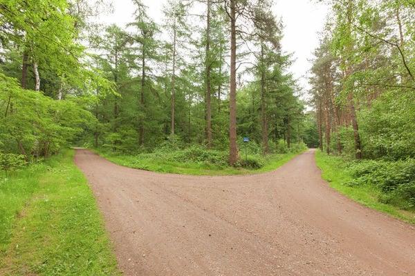 Landgoed Pijnenburg - De Beuk