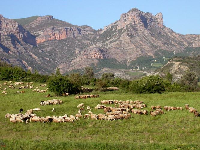 Maison de vacances Vakantiepark Isábena 3 (503405), La Puebla de Roda, Huesca, Aragon, Espagne, image 16