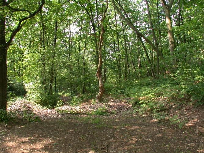Ferienhaus Gemütliches Bungalow in einem Waldgarten (59983), Dilsen-Stokkem, Limburg (BE), Flandern, Belgien, Bild 14