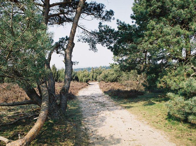 Ferienhaus Buitenplaats Berg en Bos 23 (61506), Lemele, Salland, Overijssel, Niederlande, Bild 37