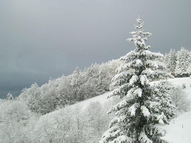 Ferienwohnung Herrischried (255393), Herrischried, Schwarzwald, Baden-Württemberg, Deutschland, Bild 26