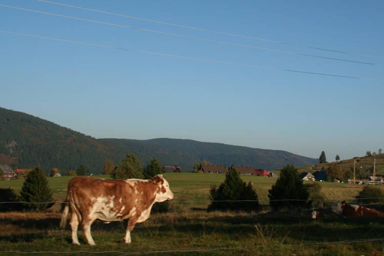 Ferienwohnung Christa (730072), Schönau (DE), Schwarzwald, Baden-Württemberg, Deutschland, Bild 18