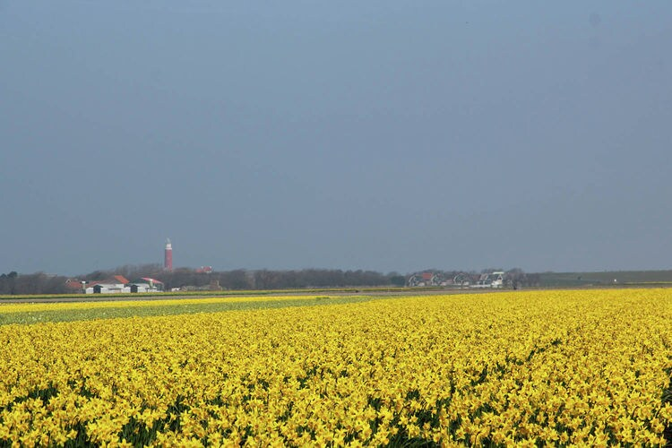Holland | Wad Islands | Holiday home 't Blauwe Huus | all year | AreaSummer5KM