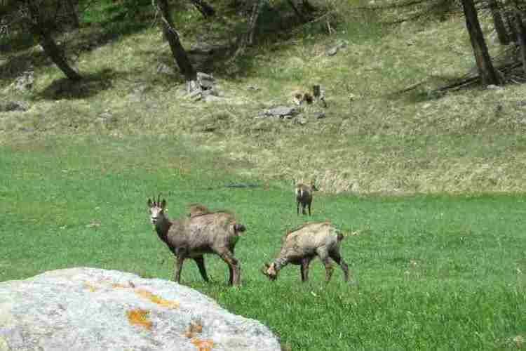 Ferienwohnung Chalet Antey Quadri C (803773), Antey Saint Andrè, , Aostatal, Italien, Bild 27