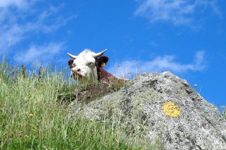 Ferienwohnung Chalet Antey Quadri B (803765), Antey Saint Andrè, , Aostatal, Italien, Bild 35