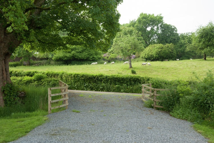 Holiday house Peregrine Stable Cottage (1483536), Llandovery, West Wales, Wales, United Kingdom, picture 13
