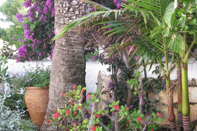 Ferienhaus Casa Kerstin (1502451), Benalmadena, Malaga, Andalusien, Spanien, Bild 31