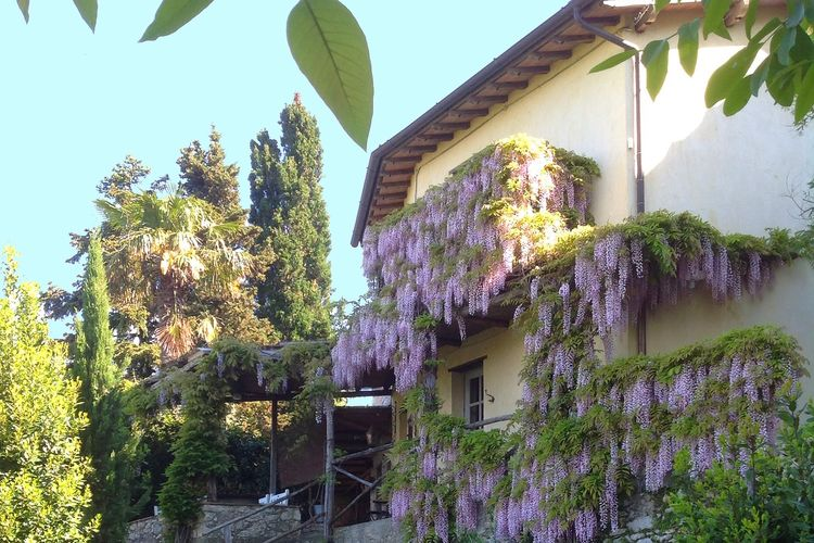 Borgo Gallinaio Terrazzino - Chalet - Camaiore