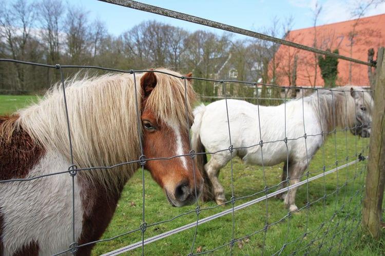 vakantiehuis Nederland, Friesland, Langweer vakantiehuis NL-0001-92