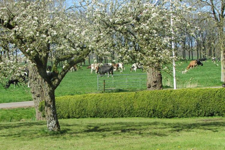 vakantiehuis Nederland, Friesland, Jelsum vakantiehuis NL-9057-01