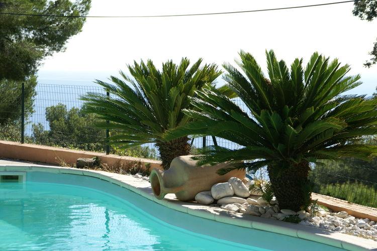 vakantiehuis Frankrijk, Provence-alpes cote d azur, Carqueiranne vakantiehuis FR-83320-08