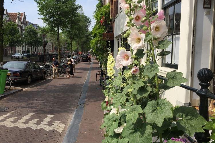 Amsterdam Vakantiewoningen te huur Appartement Oranje Tulp