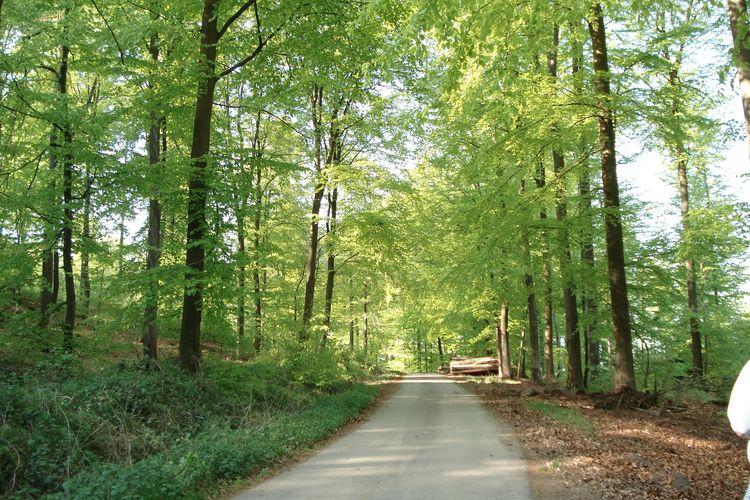 Ferienhaus Gartenoase (2241111), Mastershausen, Hunsrück, Rheinland-Pfalz, Deutschland, Bild 25