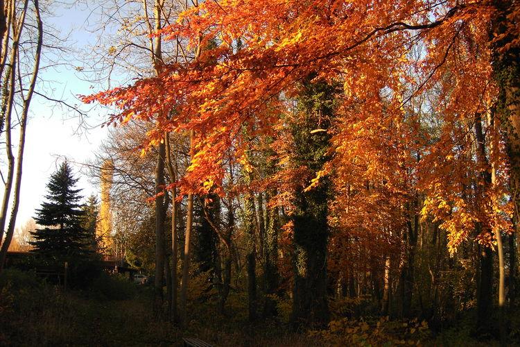 Bungalow Duitsland, Ostsee, Klein Labenz Bungalow DE-00009-43