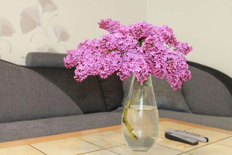 Appartement  met wifi  Stäbelow  Ferienwohnung nahe Rostock