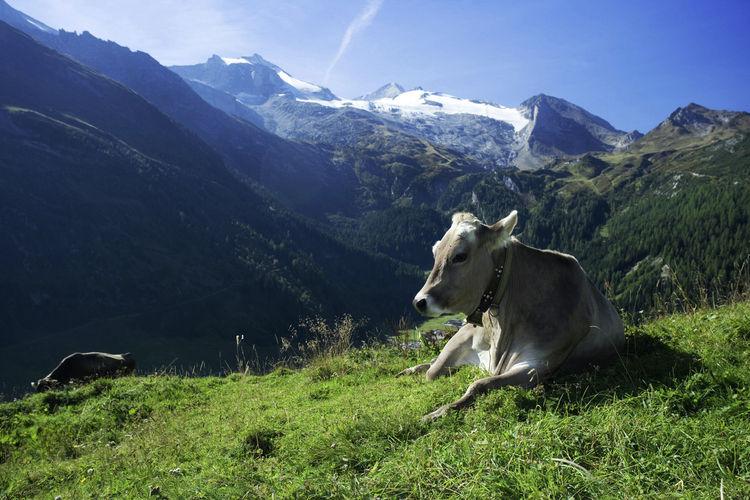 Ferienwohnung  (343313), Fügen, Zillertal, Tirol, Österreich, Bild 18
