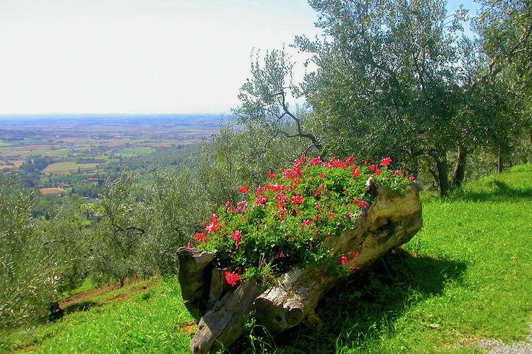 vakantiehuis Italië, Toscana, Cortona vakantiehuis IT-52044-264