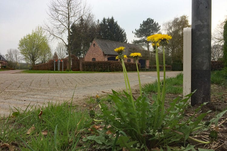 vakantiehuis Nederland, Noord-Brabant, Valkenswaard vakantiehuis NL-5555-02