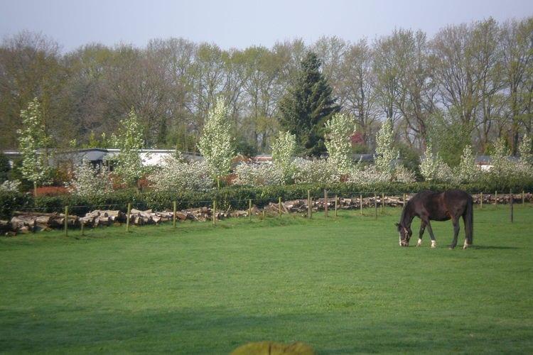 Vakantiewoning Nederland, Utrecht, Elst Chalet NL-3922-04
