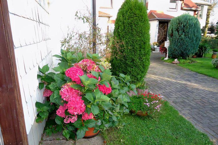 Appartement Duitsland, Thuringen, Ilmenau OT Frauenwald Appartement DE-98694-01