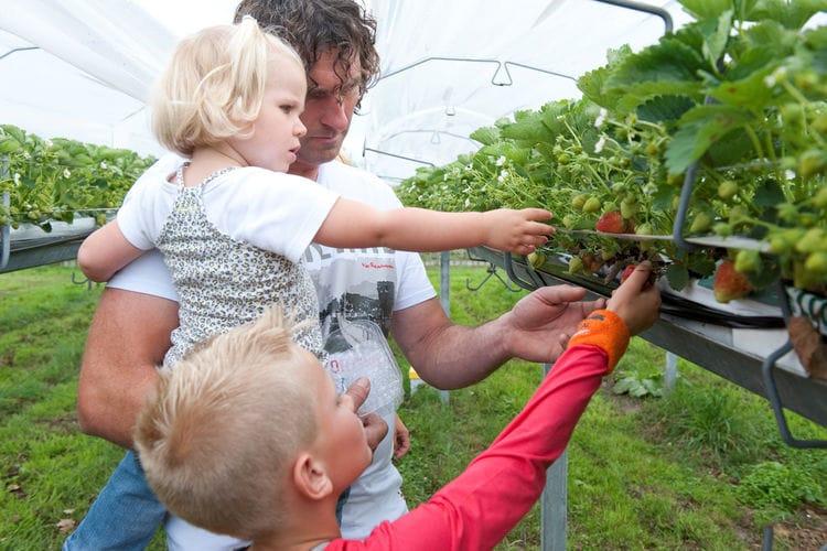 Bungalow Nederland, Noord-Brabant, Vlierden Bungalow NL-5756-11