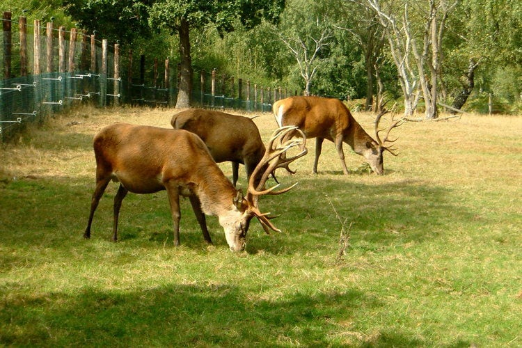 Ferienhaus Vakantiepark Les Onays (60038), Wibrin, Luxemburg (BE), Wallonien, Belgien, Bild 21