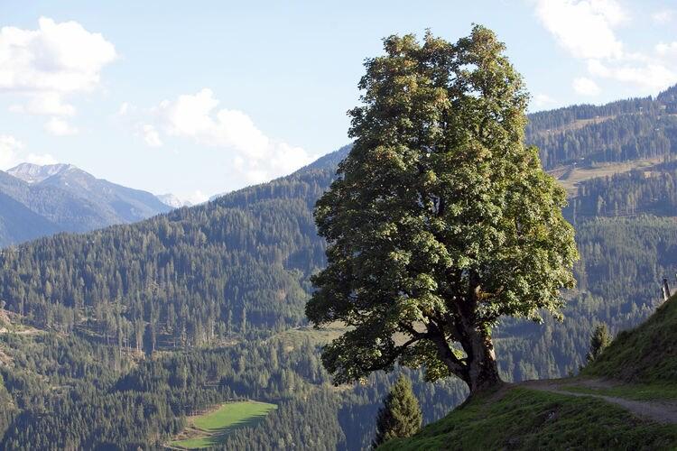 Ferienwohnung Hühneregg (253598), Wagrain, Pongau, Salzburg, Österreich, Bild 30