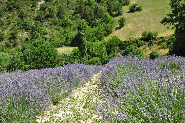 Ferienhaus Mas du Petit Vigneret (58953), Domazan, Gard Binnenland, Languedoc-Roussillon, Frankreich, Bild 24