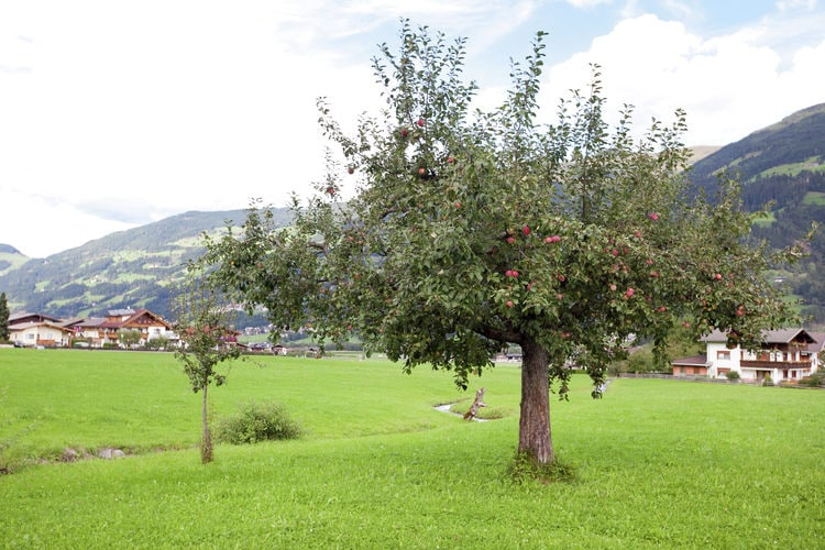 Ferienwohnung Luxner (253744), Fügen, Zillertal, Tirol, Österreich, Bild 28