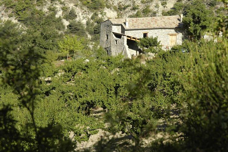 Ferienhaus Le Serre des Granges-Plus (76199), Montaulieu, Ardèche-Drôme, Rhône-Alpen, Frankreich, Bild 11